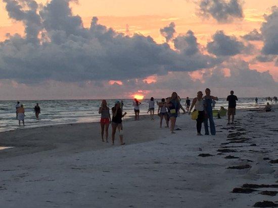 Lido Beach: Sand shark, birds and sunset