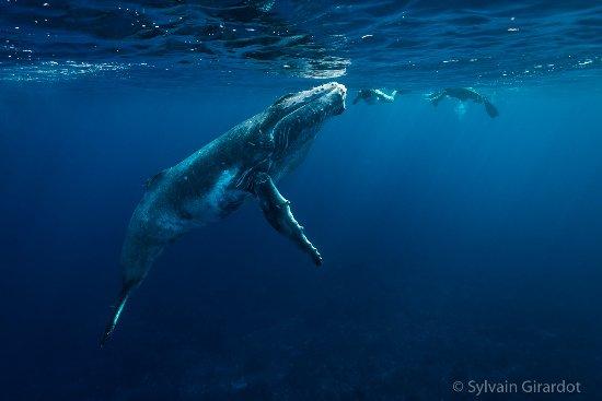 الحوت في جزيرة موريا