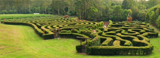 Bago Maze & Vineyards: Get Lost in our 2km Long, 2m High Hedge Maze!