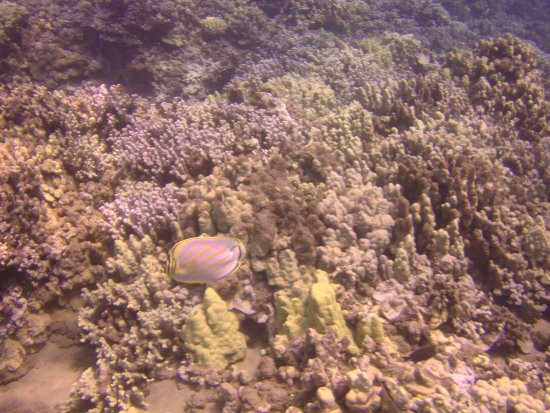 Pukalani, Hawaï: Color abounds in the reefs.