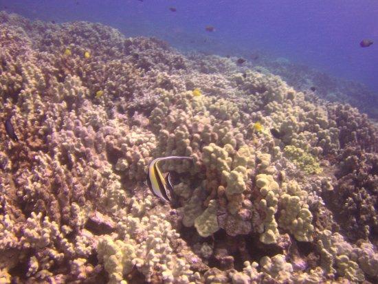 Pukalani, Hawái: Typical fish around the reefs.