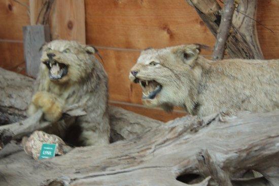 Errington, Canada : 野生動物の展示