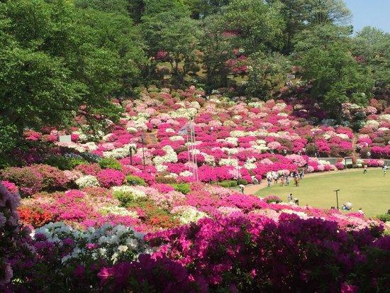 Sabae, ญี่ปุ่น: photo0.jpg