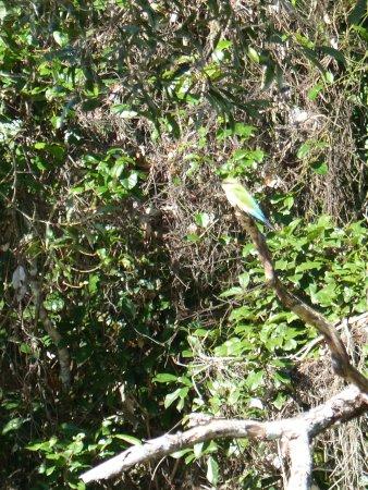 Kuranda Riverboat: Bird
