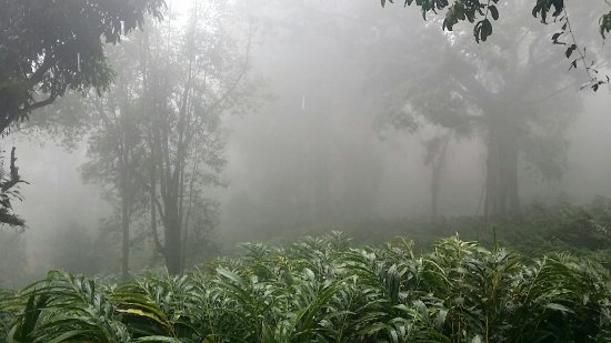 The Tall Trees Munnar: 20160618_124834_large.jpg