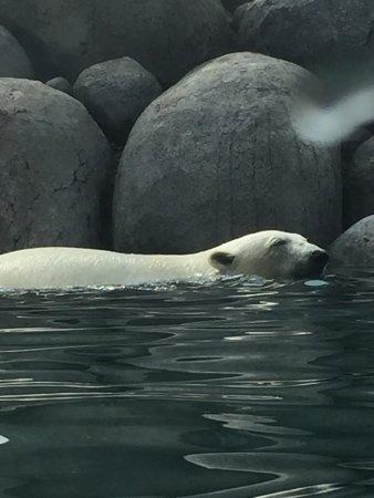 Northern Zoo: Zo dicht bij en super mooi daar