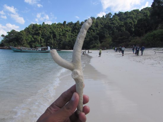 Myeik, Мьянма: A piece of coral, Lay Kyun (Four Island), Harris Island
