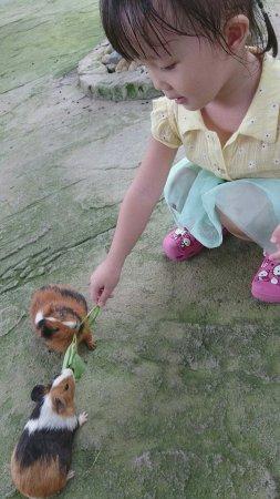 Farm In The City: 很多小動物可以和小孩親密接觸,園區內很乾淨、舒服,一票到底小孩玩的超開心