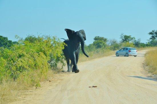 Kruger National Park-billede