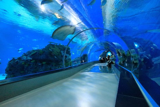 The Blue Planet Aquarium: The tunnel in the Aquarium that allows you to enjoy oceanic creatures while having rest