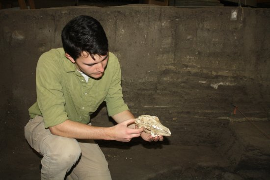 Mitchell Prehistoric Indian Village: An archaeologist at work in the Thomsen Center Archeodome.