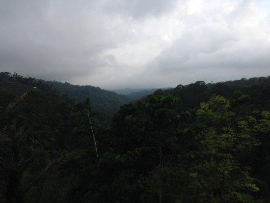 Banjar, Indonesië: Vue de la terrasse en bamboo