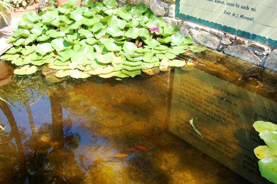 jard botnic marimurtra un estanque con peces