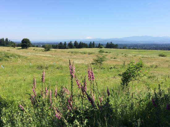 Powell Butte Nature Park: Powell Butte