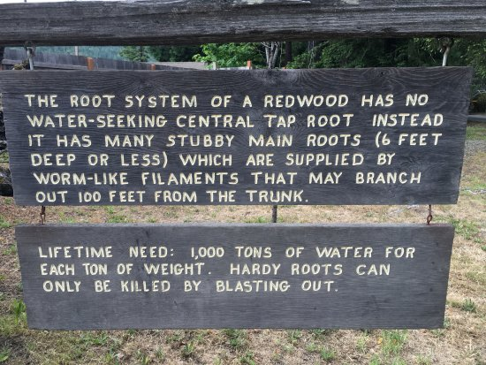 Myers Flat, Καλιφόρνια: One of the signs they have posted with neat facts about redwoods.