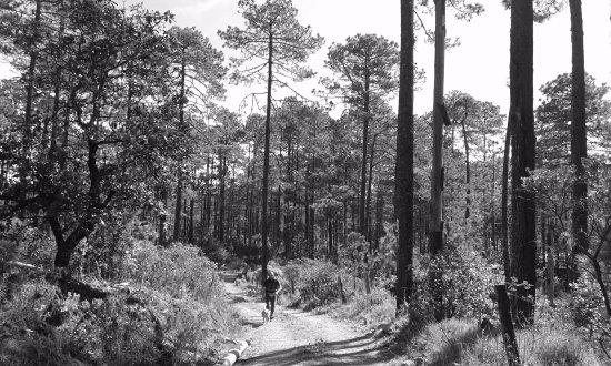 Oaxaca, Mexiko: Caminata en los bosques de la sierra, soper pro