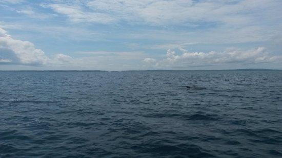 Isla Popa, Panamá: Bahía de los Delfines