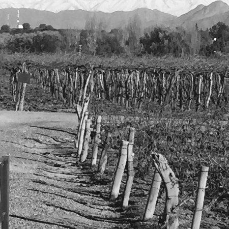 Bodegas Nieto Senetiner: photo8.jpg