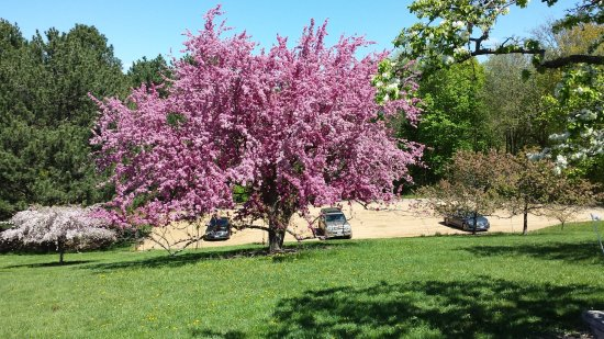 Crab Apple Trees Light Up The Landscape Picture Of Minnesota