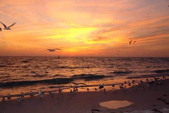Escena de la puesta del sol del pájaro que vuela - descargue el arte de vector libre, los gráficos comunes y las imágenes