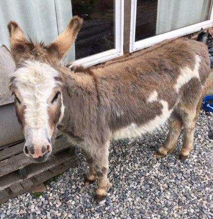 Roberts Creek, Canadá: Sweet donkey