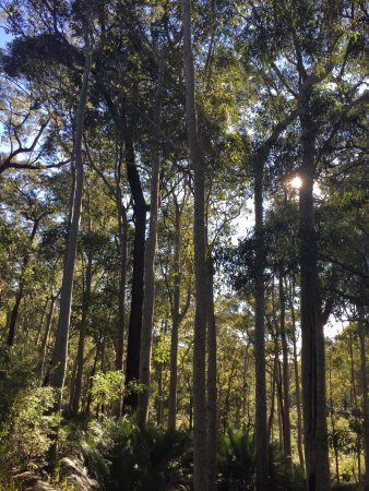 Broulee, Australië: photo2.jpg