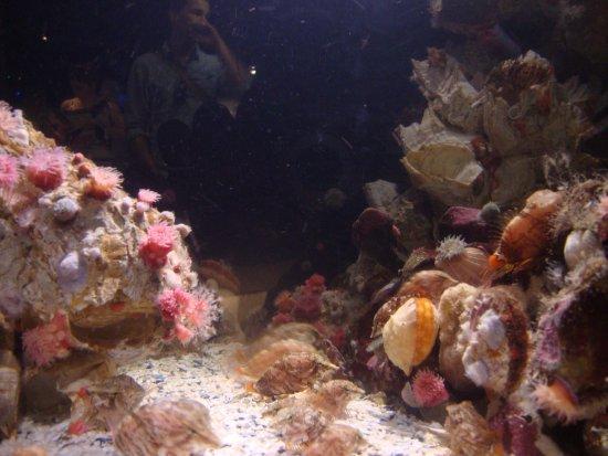 Hagensborg, แคนาดา:  Vancouver Aquarium