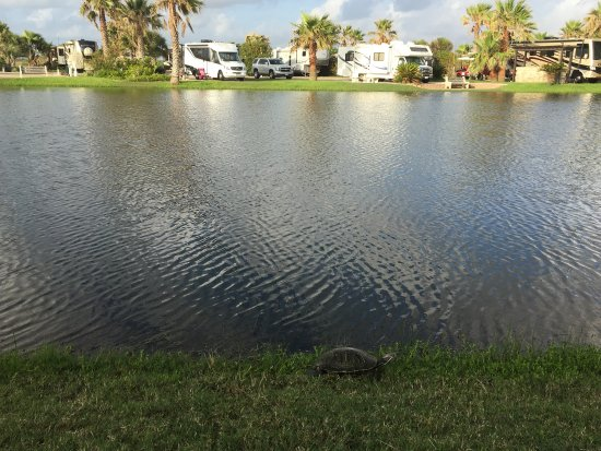Gulf Waters Beach Front RV Resort: photo0.jpg