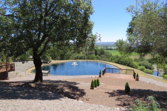 Pond Armida Winery