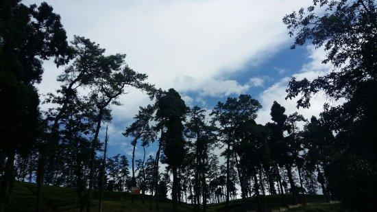Cherrapunjee, India: The road towards Cherranpunjee from Shillong
