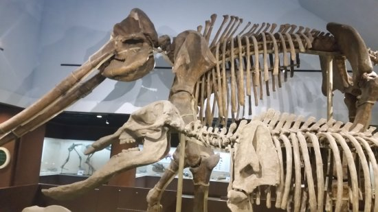 Paleozoological Museum of China