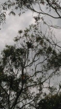 Cowes, Αυστραλία: IMAG3365_large.jpg