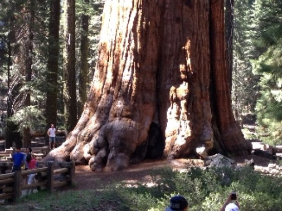 Three Rivers, Califórnia: Giant Sequoia