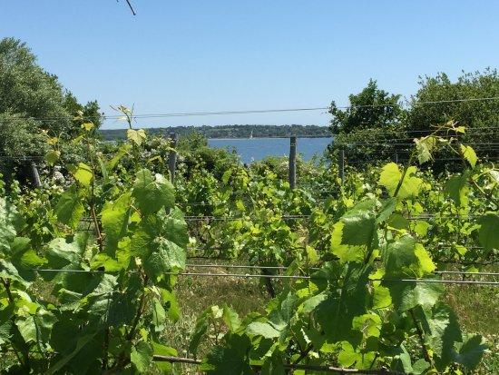 Greenvale Vineyards: Vineyard with a view of Naragansett Bay