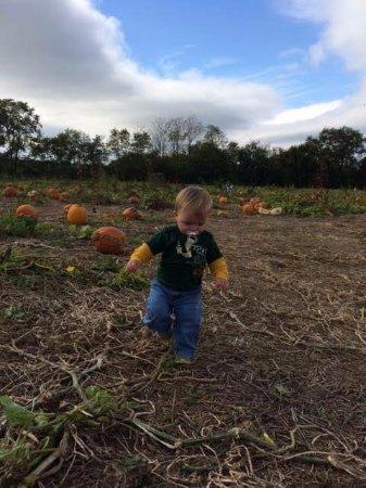 Shelbyville, KY: Pumpkin Patch