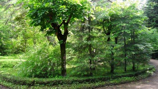 Stepanavan Sochut Dendropark