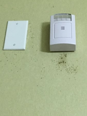 Mansfield, Luizjana: Every room smells of mold/mildew and it is no surprise based on the mold growing on the walls of