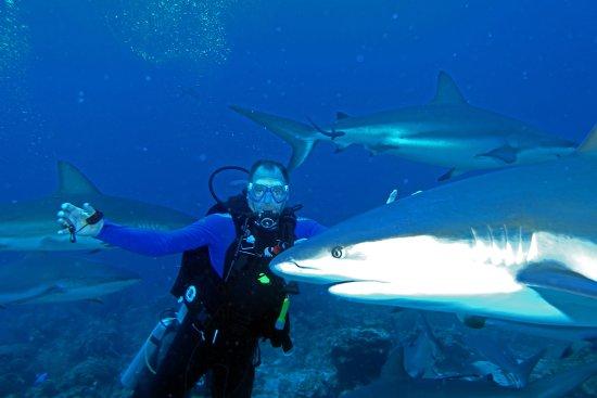 Barefoot Cay: Shark diving off resort