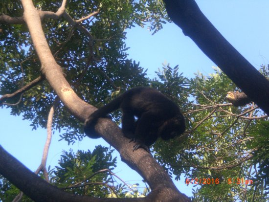 Sandos Playacar Beach Resort: Monkeys Daily Outside The Gym, Live In The Trees