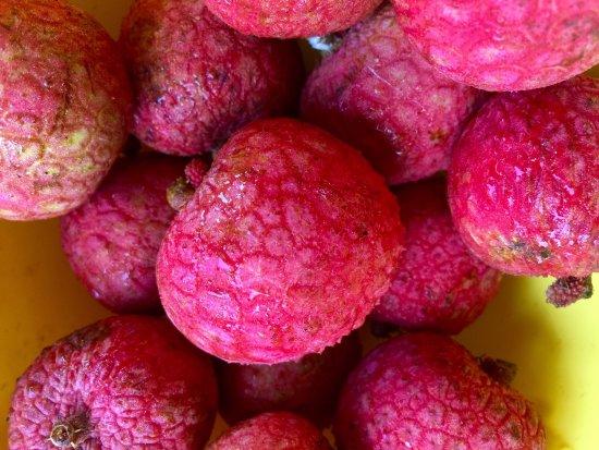 Kilauea, HI: Cacao pods and fresh exotic fruit on the tour