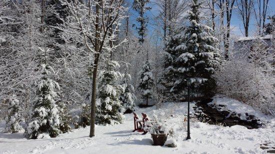 Auberge-Spa Le Madrigal: Jardin hiver