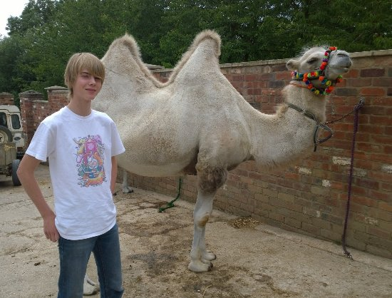 Joseph's Amazing Camels: Dylan and Kazak the Russian White Bactrian