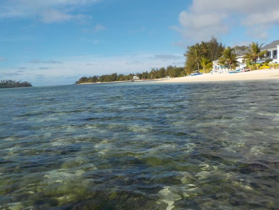 Muri Lagoon: Algamező