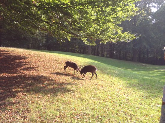 East Jutland, Denmark: some fighting deers