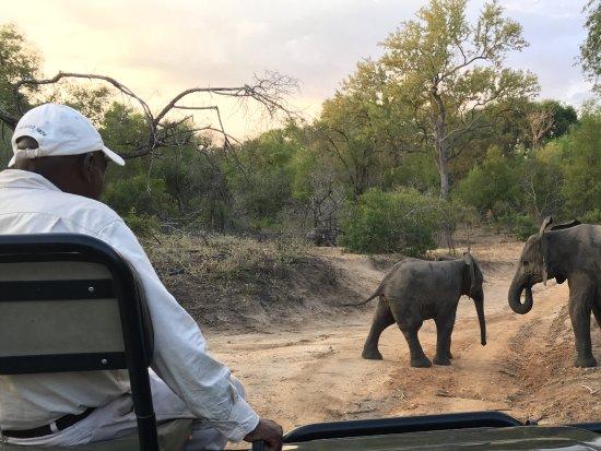 Londolozi Private Game Reserve Εικόνα