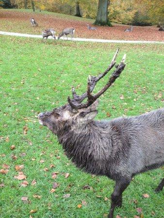 East Jutland, Denmark: mudy deer