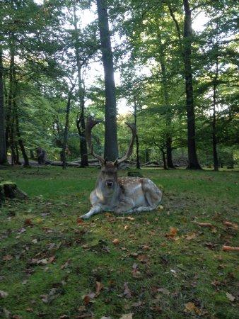 King Of A Park Picture Of Marselisborg Deer Park Aarhus Tripadvisor
