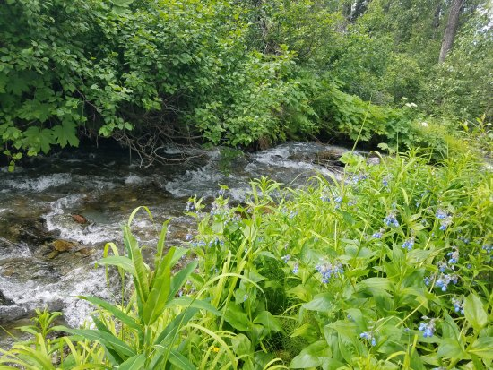 Chugiak, AK: Beautiful view of an Alaska Creek to paint by