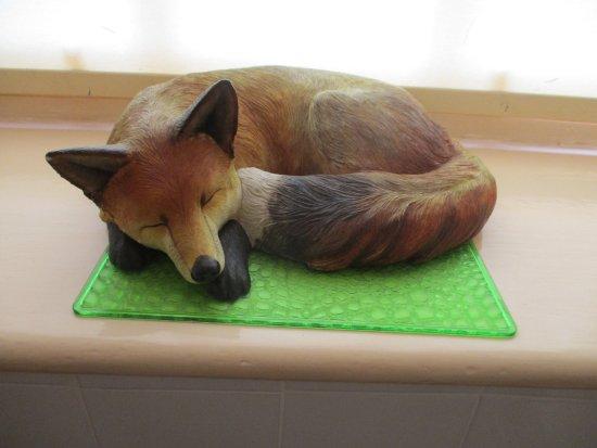 Foxes Hotel: Sleepy fox on window sill ... in the loo !
