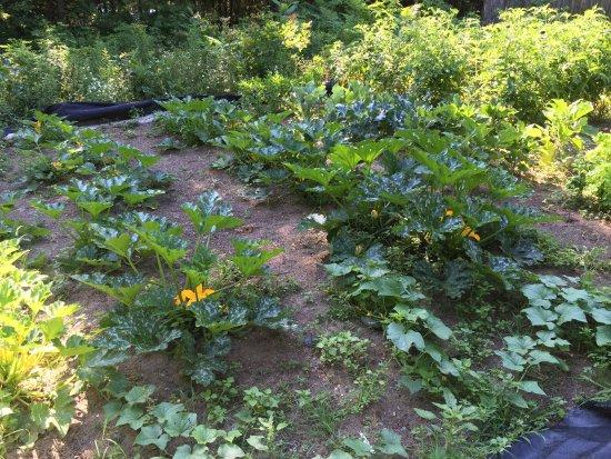 Ballston Spa, นิวยอร์ก: Garden - As Fresh as They Come